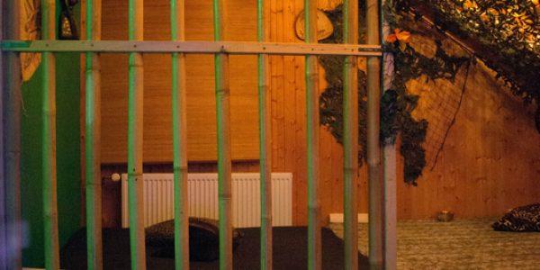 Swingerclub Absinth Käfig